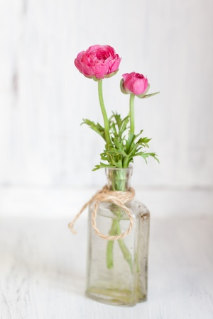 buttercup flower: Tow pink ranunculus in old vintage bottle