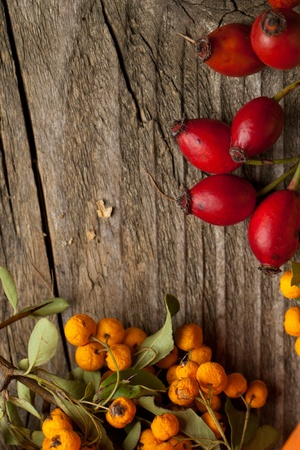 Bunch of autumn red and orange berries on old wooden table as background photo
