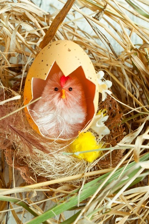 pollitos: Juguete de pollo bebé con la cáscara de huevo en el nido