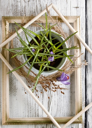 Top view on purple crocus flower in white bucket and dry wreath in old borders on white wooden table photo