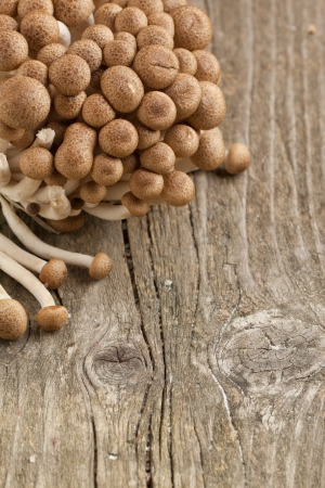 Bunch of fresh honey mushrooms on old wooden table as background Stock Photo - 13759130