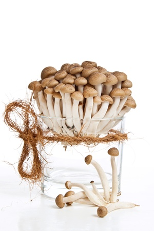 Bunch of fresh honey mushrooms in glass over white photo