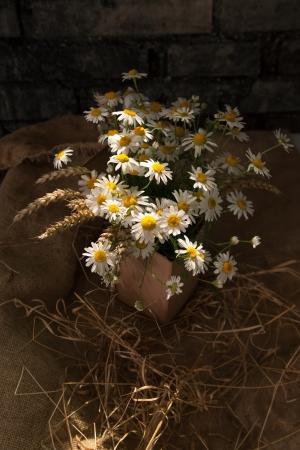 daisie: Mazzo di margherite in sole