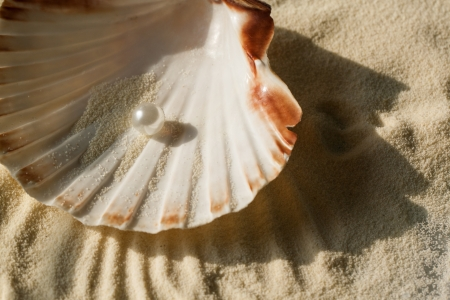 perl: white pearl in the beautiful seashell on sand