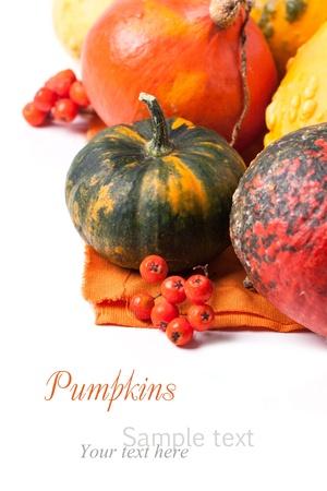 秋のミニ カボチャとサンプル テキストを白でベリー