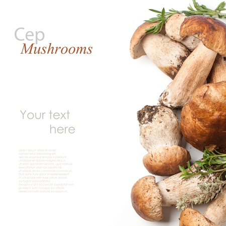 Top view on cep mushrooms with fresh thyme over white with sample text Zdjęcie Seryjne