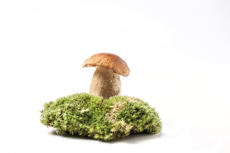 cep mushroom: One cep mushroom on green forest moss isolated over white Stock Photo