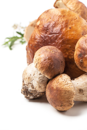 cep: Heap of cep mushrooms over white