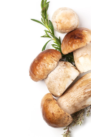 Top view on heap of cep mushrooms and thyme over white Stock Photo - 22260814