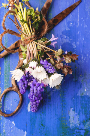 Top view on bouquet of wildflowers and old rusty scissors over blue wooden background photo