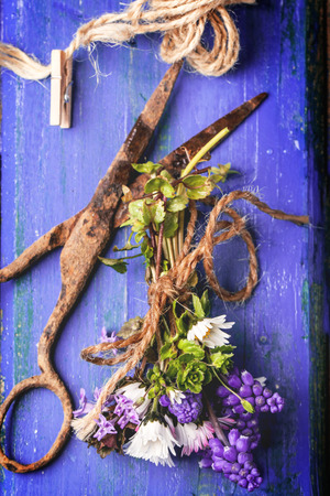 Top view on bouquet of wildflowers and old rusty scissors over purple wooden background photo