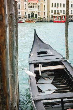View on Venice street from gondola with white little heron. Venice, Italy photo