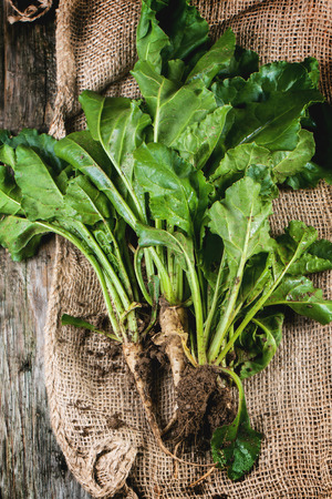 haulm: Bunch of young sugar beet roots with soil and haulm over sacking. Top view. Stock Photo