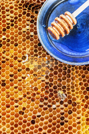 Honeycombs with honey, bee and wooden honey dipper over blue ceramic plate photo