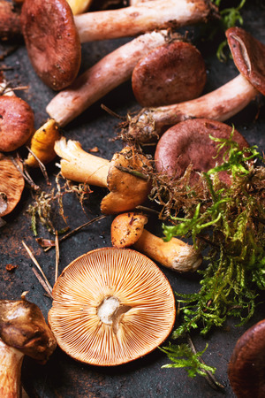 Mix of forest mushrooms on black cutting board. Top view. See series photo