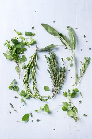 herbs: Surtido de hierbas frescas de tomillo, romero, salvia y orégano sobre fondo claro de madera azul. Vista superior