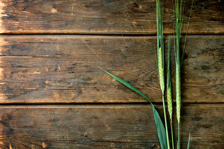 Three ears of young green barley over wooden background. Top view photo