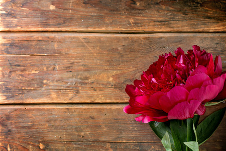 pion: Big burgundy peony flower over wooden background. Top view.