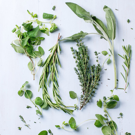 Assortment of fresh herbs thyme, rosemary, sage and oregano over light blue wooden background. Top view. Square image Standard-Bild