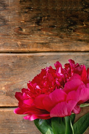 pion: Big burgundy peony flower over wooden background. Top view. Selective focus