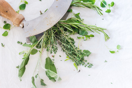 green herbs: Assortment of fresh herbs thyme, rosemary, sage and oregano with vintage herbs cutter on white textile as background. Top view.