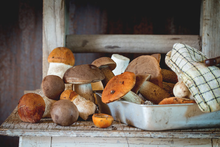 Edible forest mushrooms (Birch bolete - Leccinum scabrum and aspen mushroom - Boletus edulis ) in aluminum tray with checkered kitchen towel over old wooden table. Rustic style. Natural day light. Stock Photo
