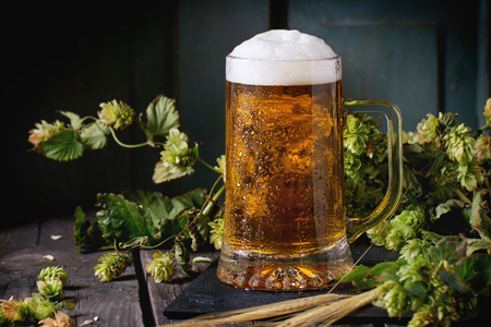 Mug of fresh draught lager beer with foam on black slate, served on old wooden table with green hop and ears of barley. Dark rustic style 免版税图像