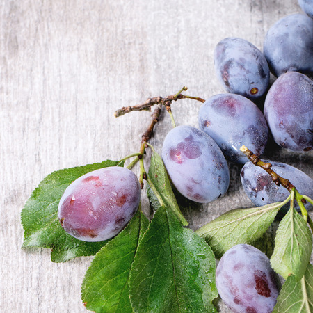 ciruelo: ciruelas maduras con púrpura rama y hojas sobre fondo de madera gris. cuadrado de imagen con enfoque selectivo Foto de archivo