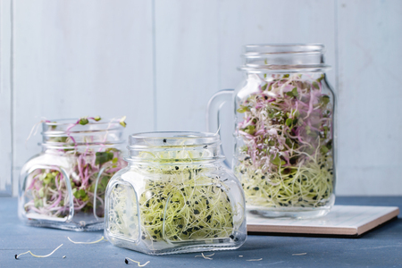 Healthy diet. Fresh Garlic and Radish Sprouts in glass mason jars, standing over blue wooden table.
