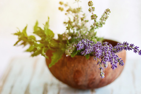 selective focus: Bouquet of fresh aromatic garden herbs mint, thyme and lavender in half of coconut shell on old wooden table with window at background. Rustic style, natural day light Stock Photo