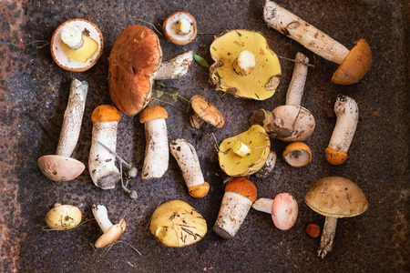 assortment: Variety of uncooked wild forest mushrooms yellow boletus, birch mushrooms, russules over dark textured rusty background. Rustic style, natural day light. Top view, food background concept Stock Photo
