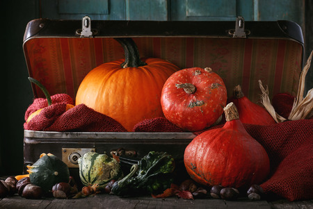 Assortment of different decorative and edible pumpkins and chestnuts in open vintage suitcase with red sacking over old wooden table. Dark rustic style