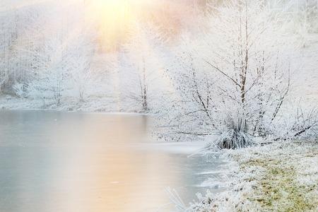 Frozen trees nea lake in fog winter day. Winter landscape