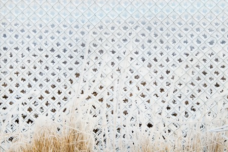 enclosure: Frozen chain-link fencing enclosure with last years grass. Winter background. Close up