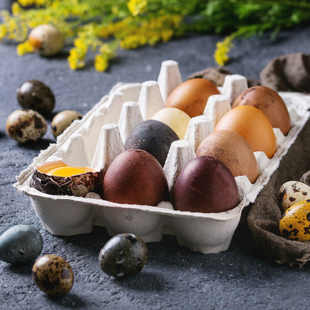Brown and gray colored chicken and quail Easter eggs in paper box with yolk, yellow flowers, sackcloth rag over black concrete texture background. Copy space. Square image