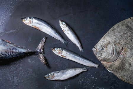 Raw fresh tuna, herring and flounder fish over dark wet metal background. Top view with space