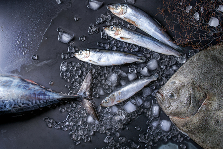 oceanic: Raw fresh tuna, herring and flounder fish on crushed ice over dark wet metal background. Top view with space Stock Photo