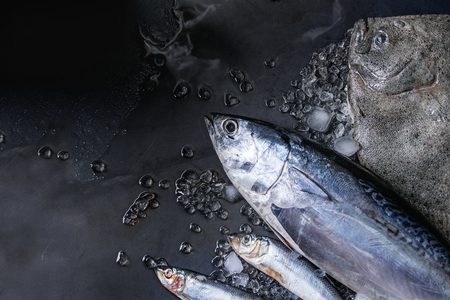 어두운 신선한 젖은 금속 배경 위에 짓 눌린 된 얼음에 원시 신선한 참치, 청 어 및 넙치 물고기. 공간이있는 상단보기