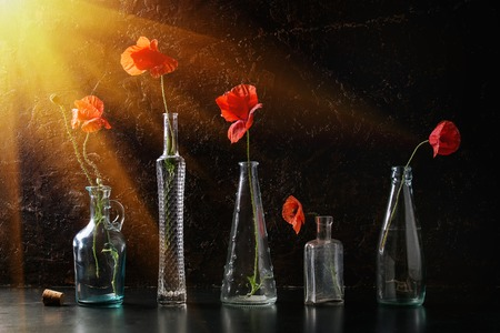 Blossom wild red poppy flowers in different glass bottles over dark texture background. Still life with copy space