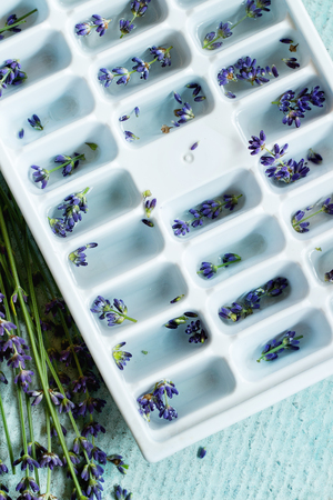 Plastic mold with water for making ice cubes flavored with lavender flowers, standing on turquoise texture background. Rustic style, day light. Top view