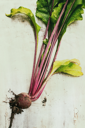 Raw organic young vegetable beetroot with haulm and soil over gray texture background. Top view