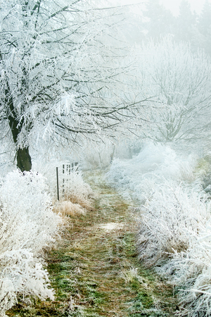 Frozen winter country path walkway to forest with grass and tree in frost. Stock Photo