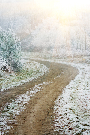 Frozen fog winter country path walkway to forest with grass and tree in frost. Stock Photo
