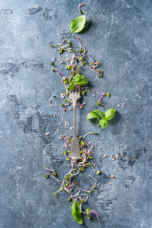 Young radish sprouts with pink himalayan salt and basil leaves with vintage fork over blue texture background. Top view with copy space. Healthy diet concept, food background Banco de Imagens - 88552713