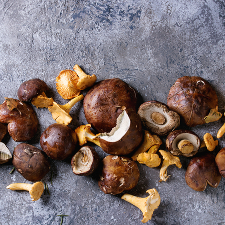 Heap of fresh forest porcini boletus and chanterelles mushrooms over gray texture background. Top view with space. Square image