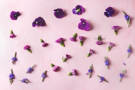 Variety of purple edible flowers for dish decorating over pink pastel background. Top view, space. Archivio Fotografico - 101498884