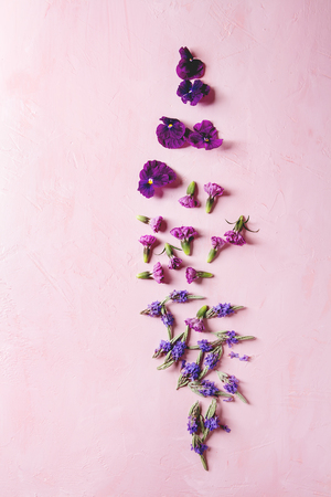 Variety of purple edible flowers for dish decorating over pink pastel background. Top view, space. Фото со стока