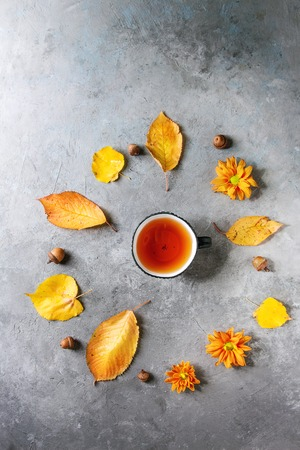 Cup of hot tea decorated by yellow autumn leaves, aster flowers and acorns over grey texture background. Flat lay, space. Seasonal background. 版權商用圖片