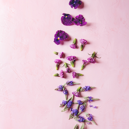 Variety of purple edible flowers for dish decorating over pink pastel background. Top view, space. Square image