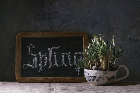 Calligraphic inscription gothic hand lettering letters spring on black chalkboard standing on linen table cloth with blossom snowdrops in ceramic mug. Spring coming concept background.